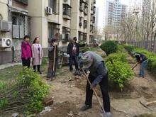 望京南湖中园配合物业公司开展养护绿地活动