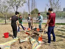 望京孵化公司联合支部组织植树活动