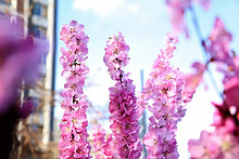 望京的春天:最美的时刻,我遇到了你