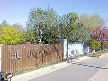 望京北小河公园:良辰美景 飘絮恼人