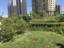 歌手汪正正在望京小区种树?美化环境or占用公共绿地?