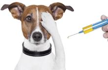 望京街道开启犬免疫注射疫苗工作