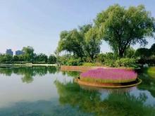 望和公园建成朝阳首个生态群落