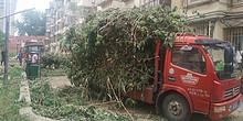 接诉即办 | 花家地南里:树枝繁茂存隐患,及时修整保平安