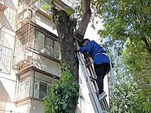 有事儿您说话 | 望花路东里:修剪树枝除隐患 为民服务无小事